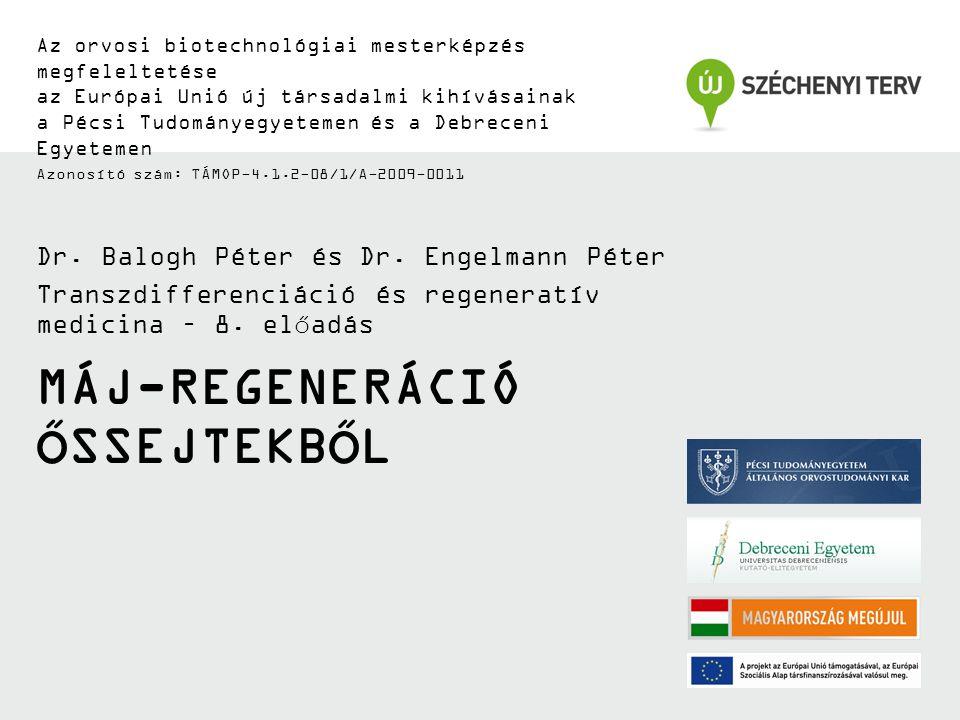 Máj-regeneráció őssejtekből