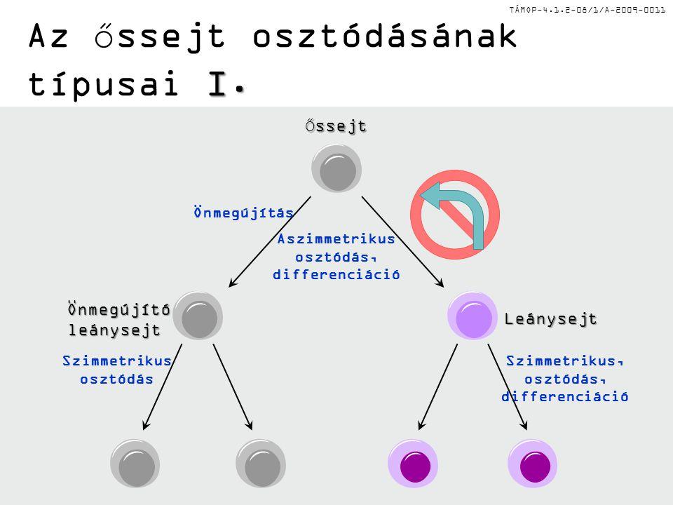 Az őssejt osztódásának típusai I.