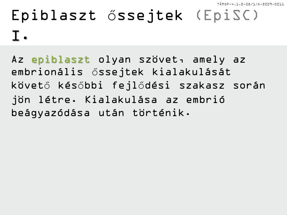 Epiblaszt őssejtek (EpiSC) I.