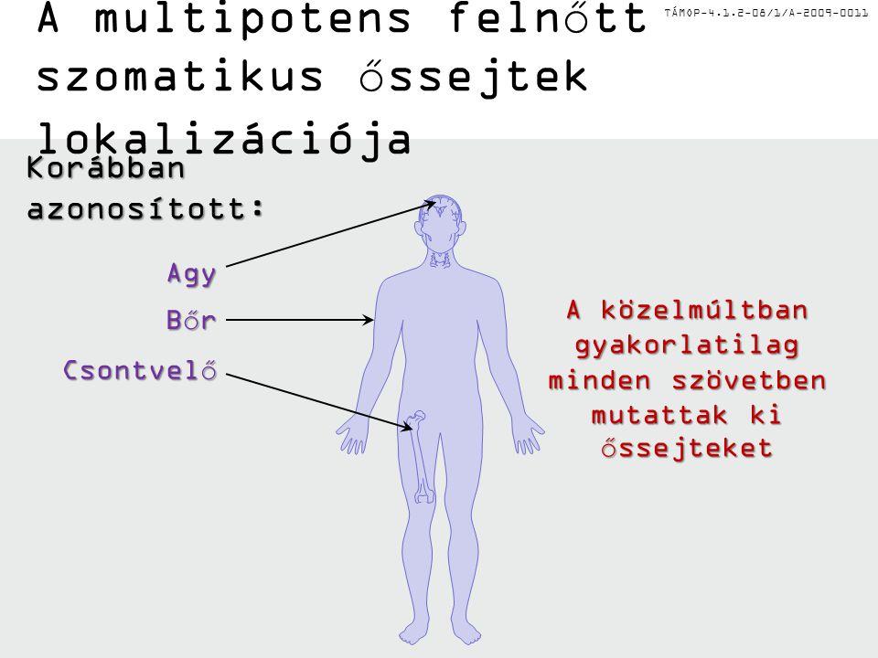 A multipotens felnőtt szomatikus őssejtek lokalizációja