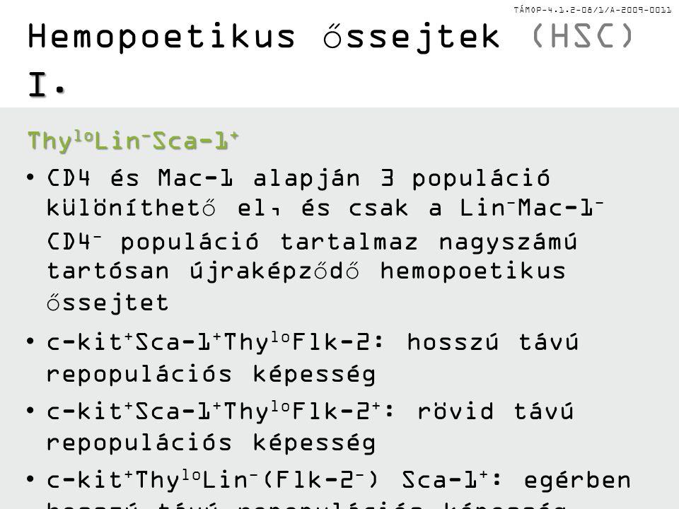Hemopoetikus őssejtek (HSC) I.