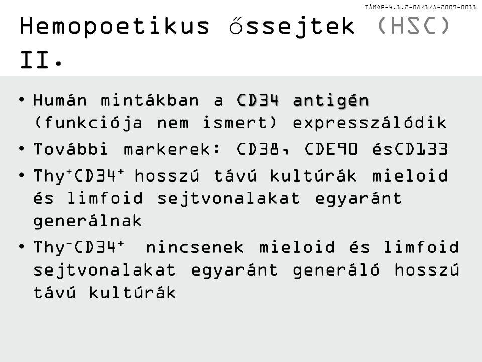 Hemopoetikus őssejtek (HSC) II.