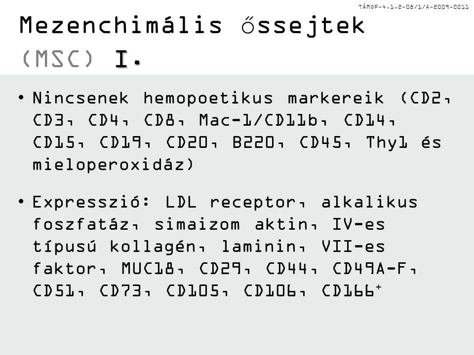 Mezenchimális őssejtek (MSC) I.