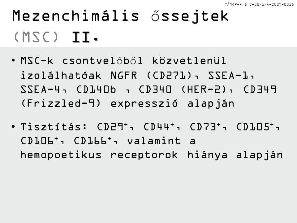 Mezenchimális őssejtek (MSC) II.