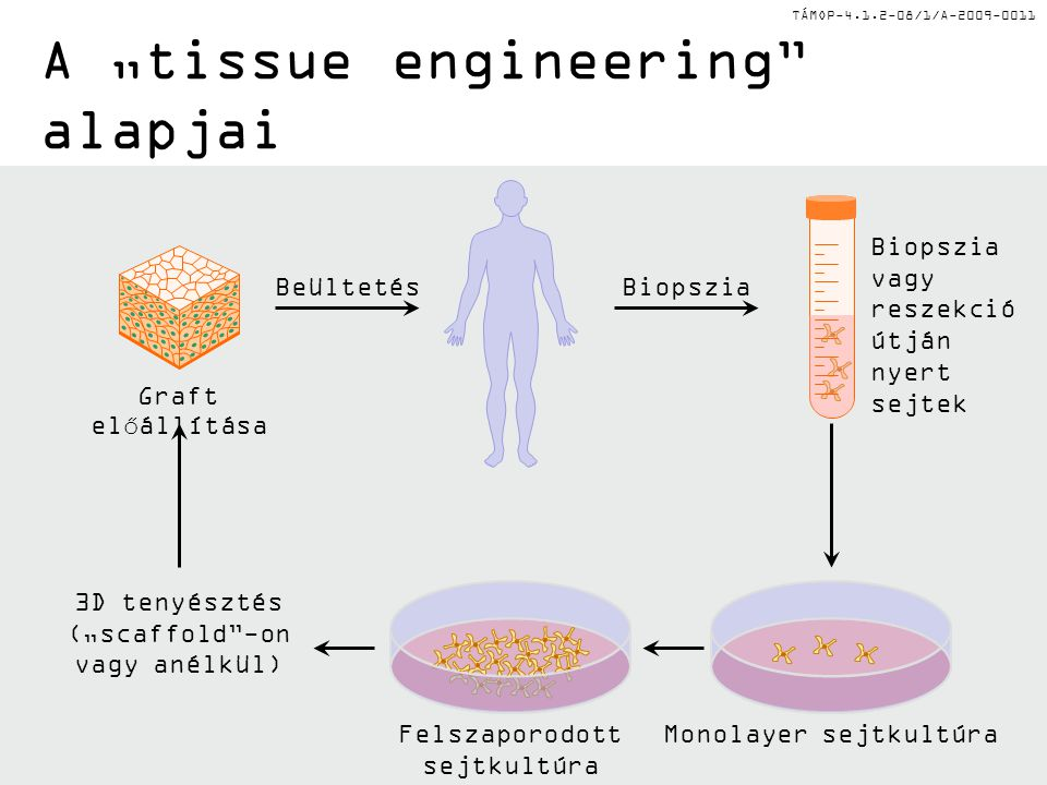 "A ""tissue engineering alapjai"