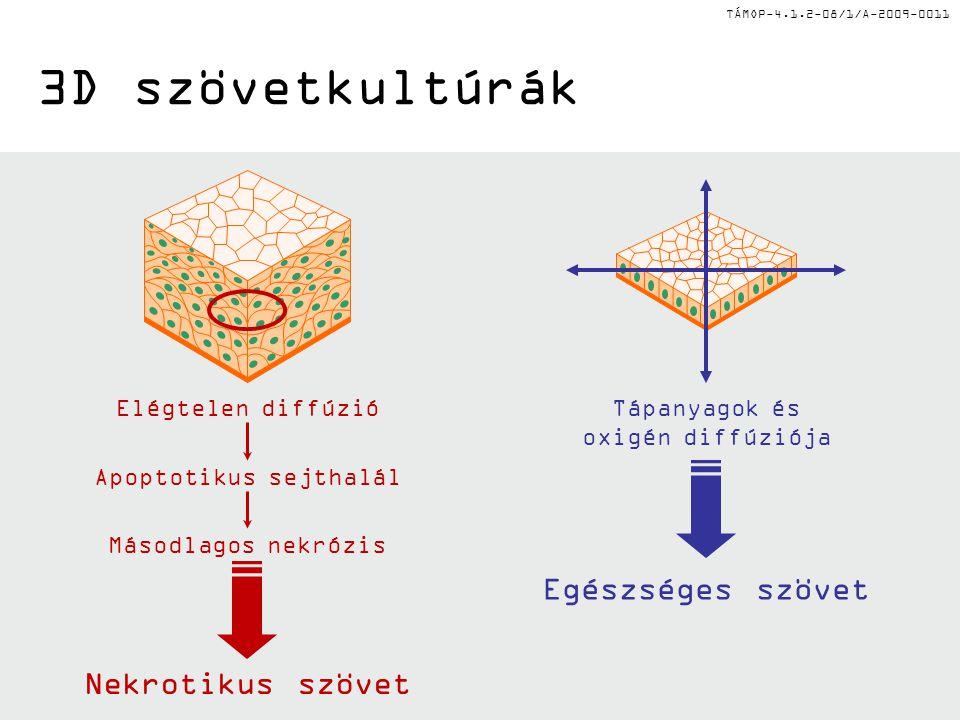 3D szövetkultúrák Egészséges szövet Nekrotikus szövet