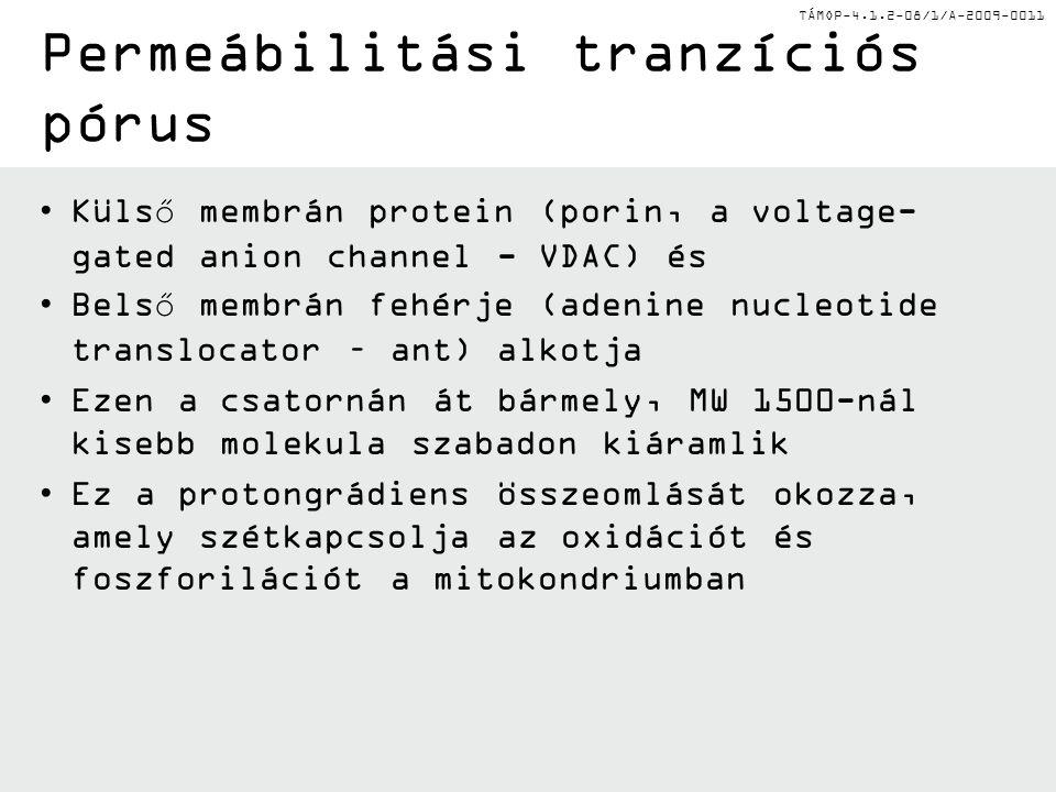 Permeábilitási tranzíciós pórus