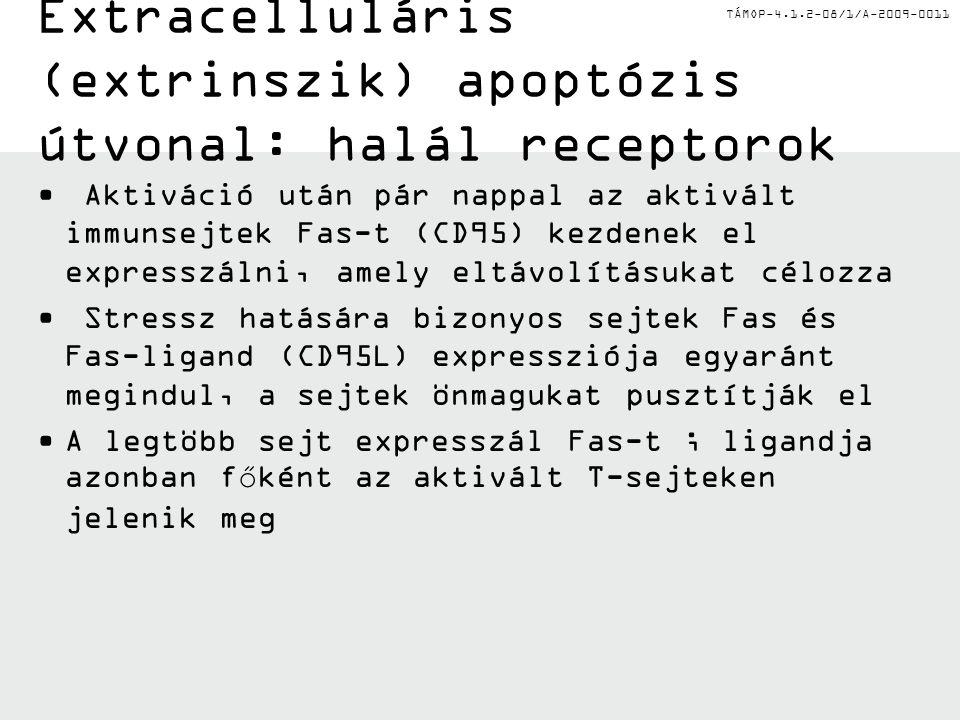 Extracelluláris (extrinszik) apoptózis útvonal: halál receptorok