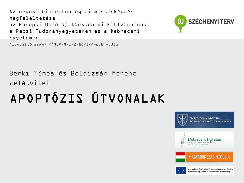 Apoptózis útvonalak Berki Tímea és Boldizsár Ferenc Jelátvitel