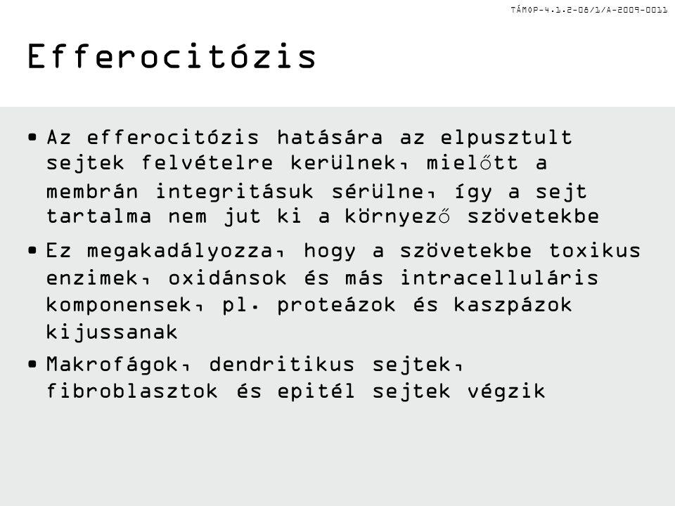 Efferocitózis