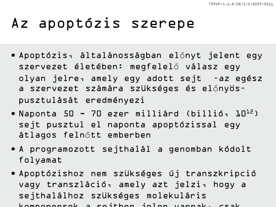 Az apoptózis szerepe