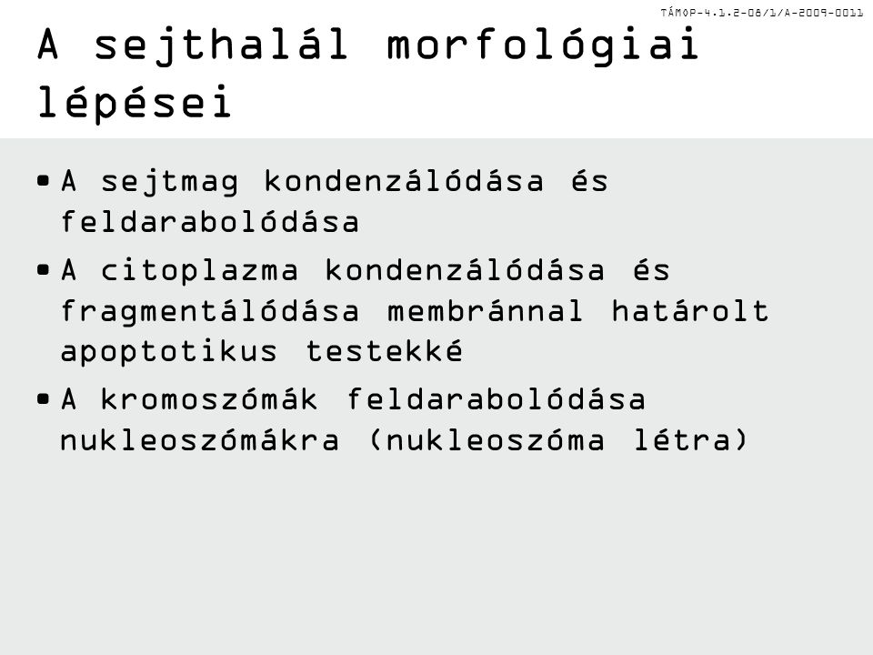 A sejthalál morfológiai lépései