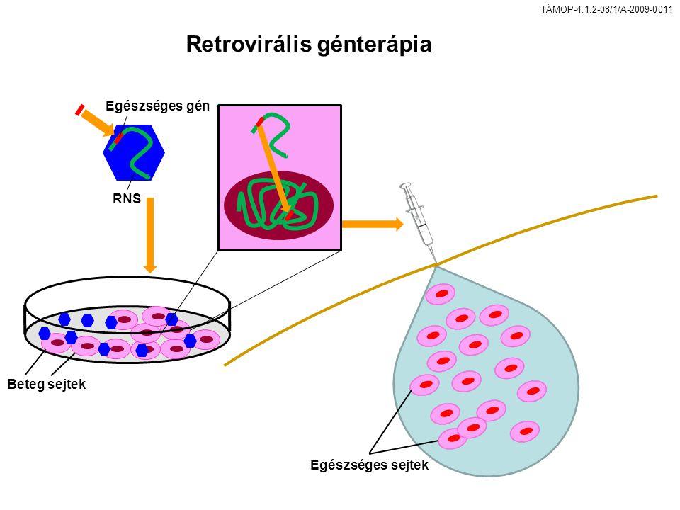 Retrovirális génterápia