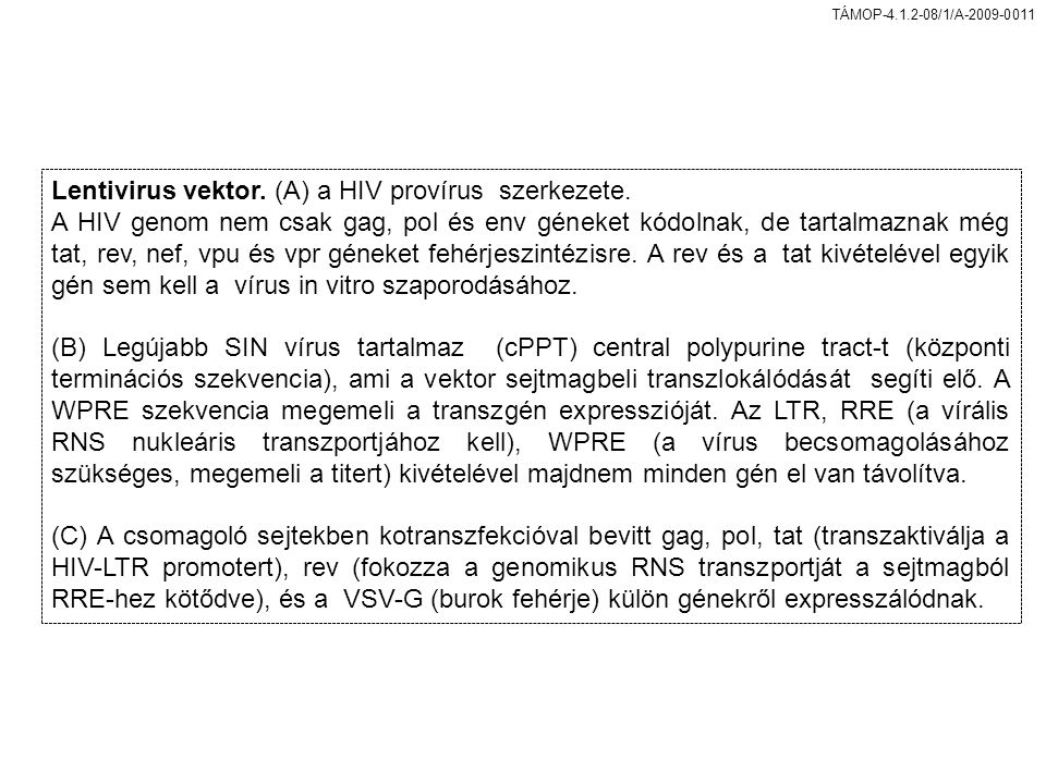 Lentivirus vektor. (A) a HIV provírus szerkezete.