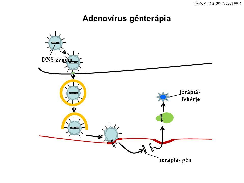 Adenovírus génterápia