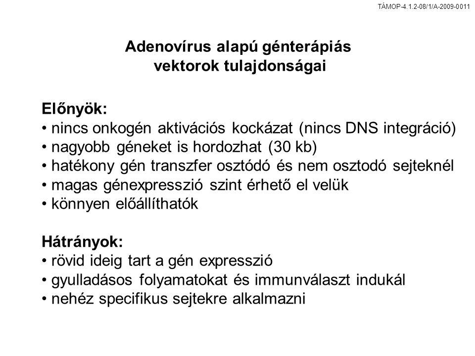 Adenovírus alapú génterápiás vektorok tulajdonságai
