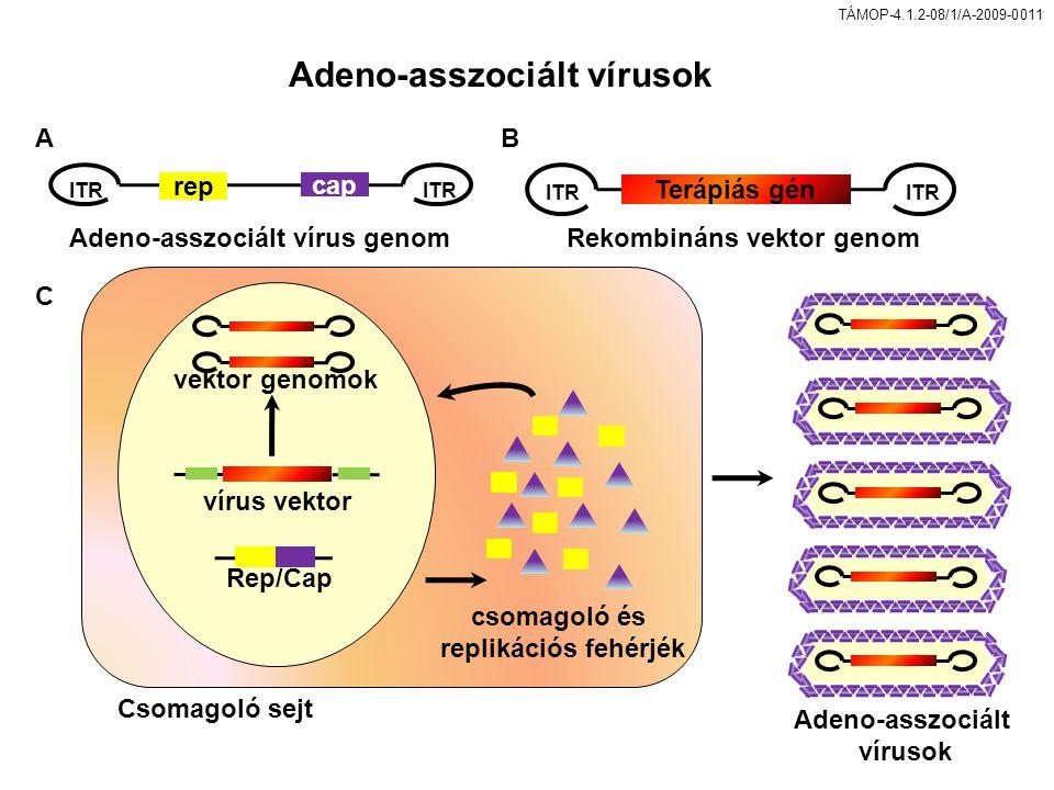 Adeno-asszociált vírusok