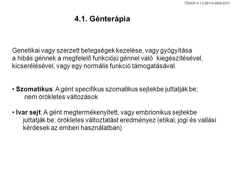 4.1. Génterápia Genetikai vagy szerzett betegségek kezelése, vagy gyógyítása. a hibás génnek a megfelelő funkciójú génnel való kiegészítésével,