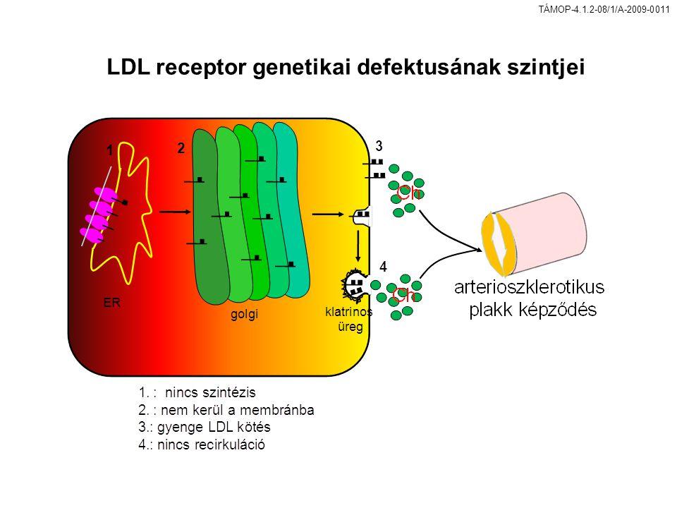 LDL receptor genetikai defektusának szintjei