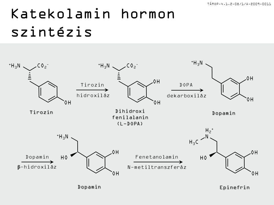 Katekolamin hormon szintézis