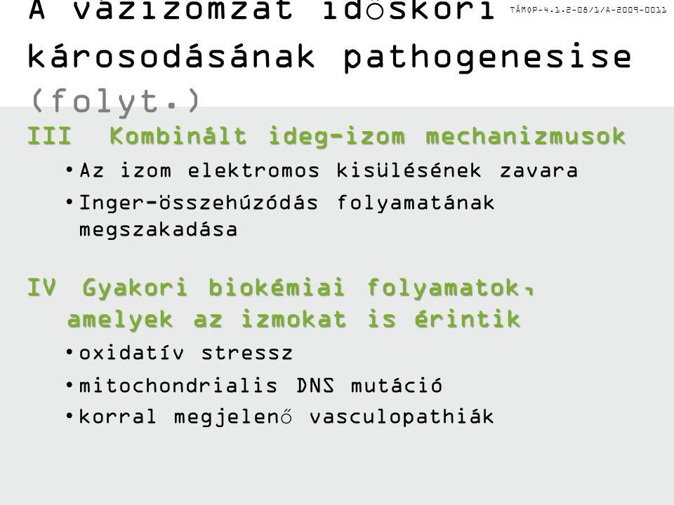 A vázizomzat időskori károsodásának pathogenesise (folyt.)