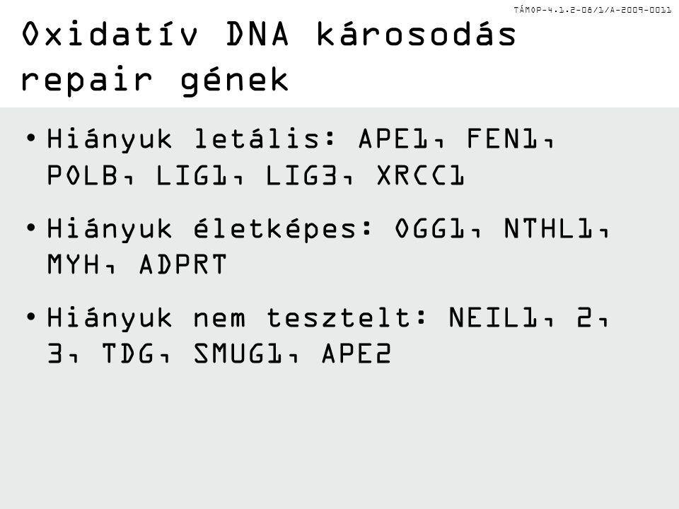 Oxidatív DNA károsodás repair gének