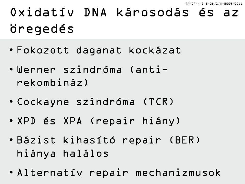 Oxidatív DNA károsodás és az öregedés