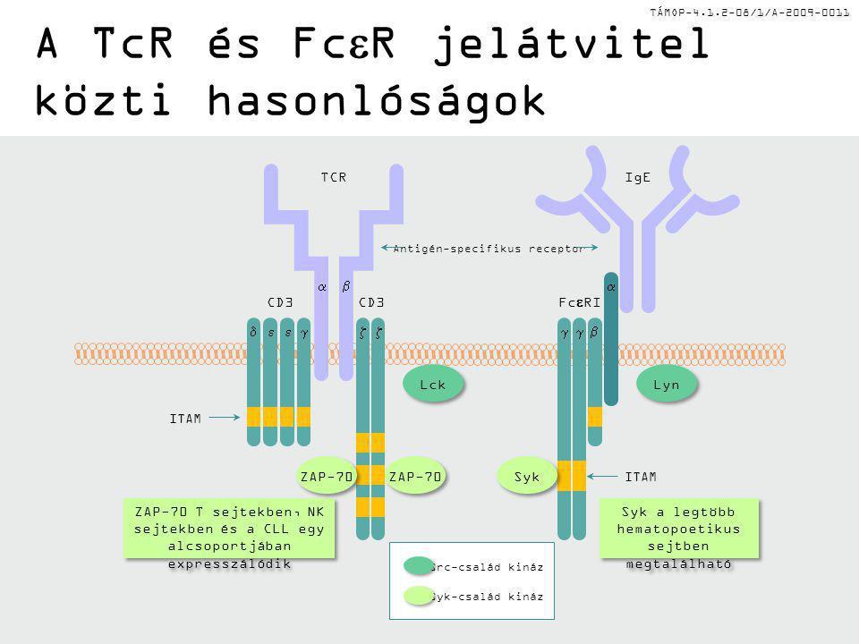 A TcR és FceR jelátvitel közti hasonlóságok