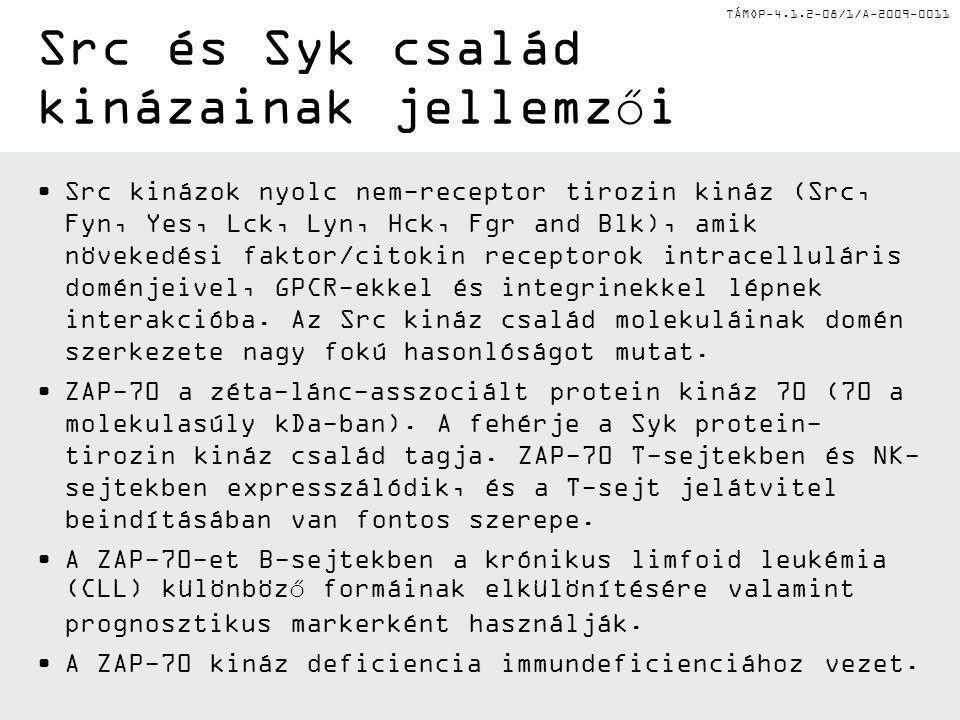 Src és Syk család kinázainak jellemzői