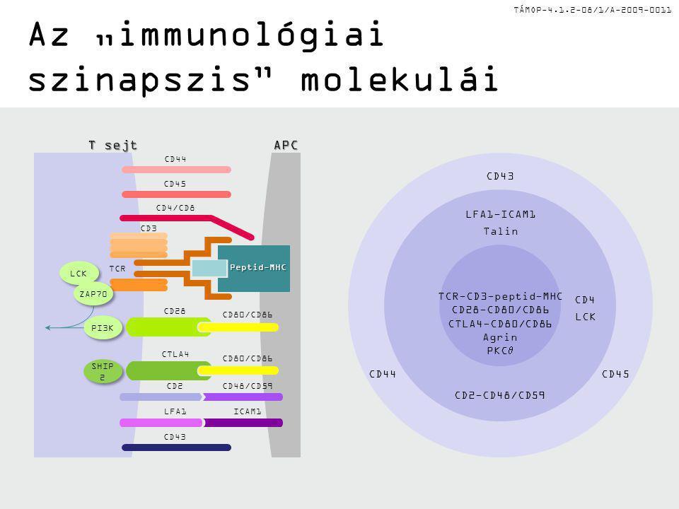 """Az """"immunológiai szinapszis molekulái"""