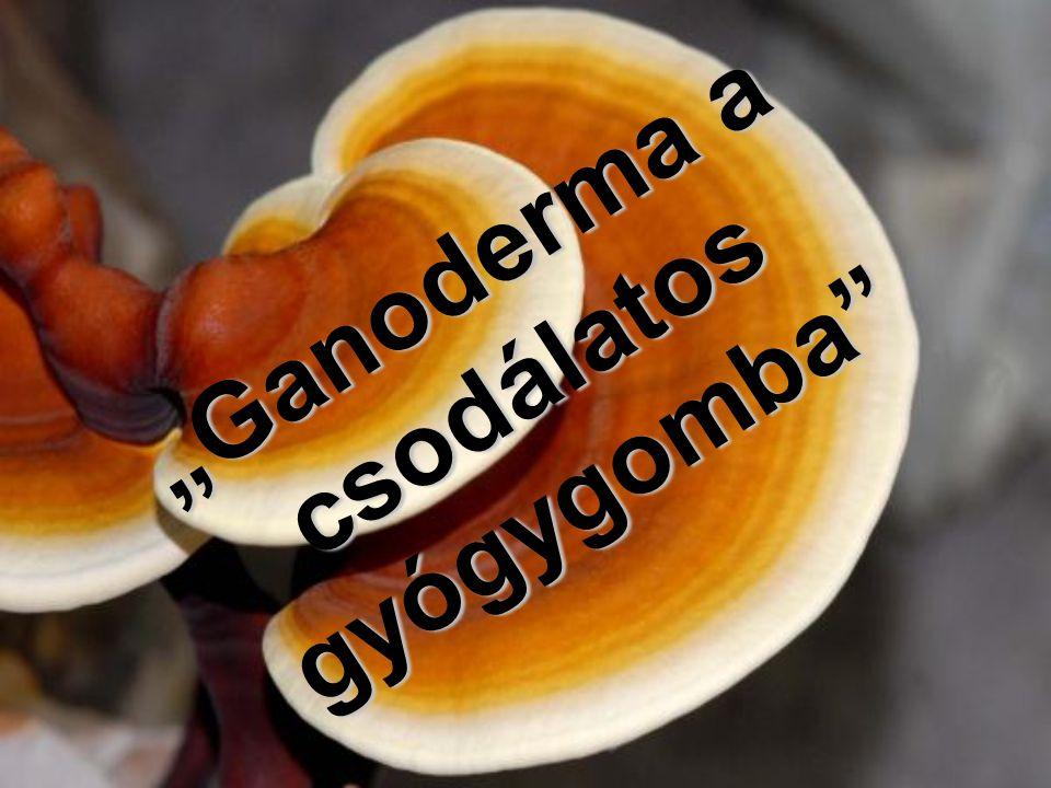 """""""Ganoderma a csodálatos gyógygomba"""