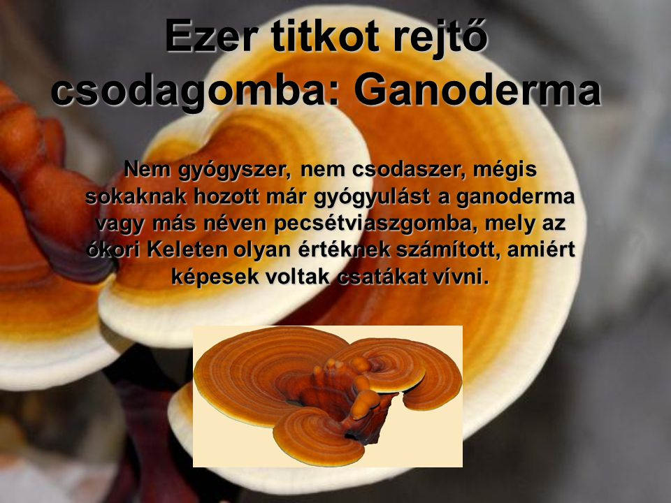 Ezer titkot rejtő csodagomba: Ganoderma