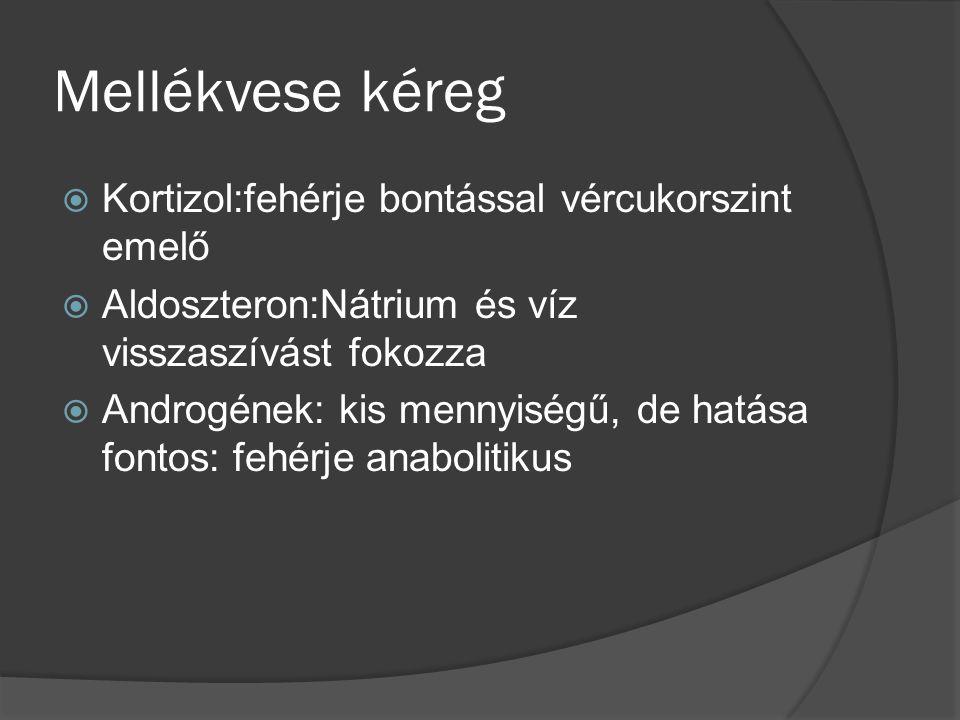 Mellékvese kéreg Kortizol:fehérje bontással vércukorszint emelő