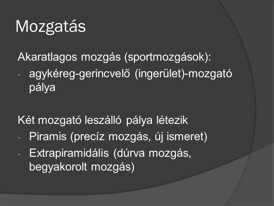 Mozgatás Akaratlagos mozgás (sportmozgások):