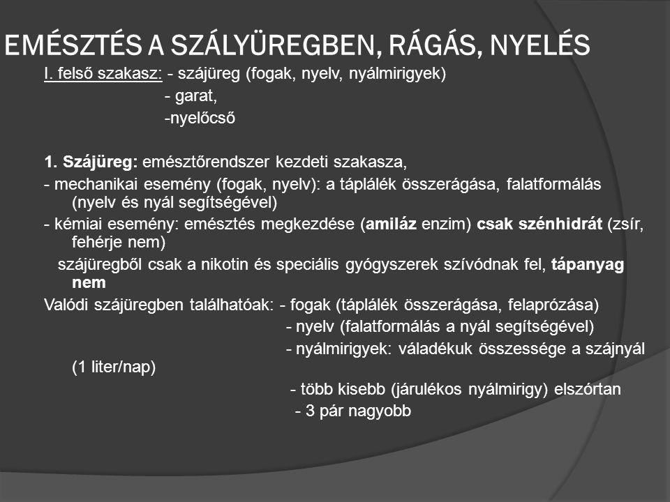 EMÉSZTÉS A SZÁLYÜREGBEN, RÁGÁS, NYELÉS