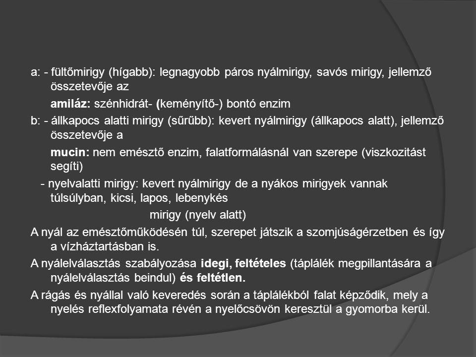 a: - fültőmirigy (hígabb): legnagyobb páros nyálmirigy, savós mirigy, jellemző összetevője az