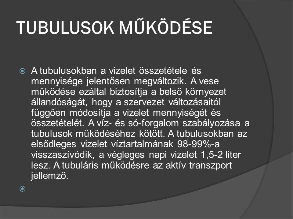 TUBULUSOK MŰKÖDÉSE