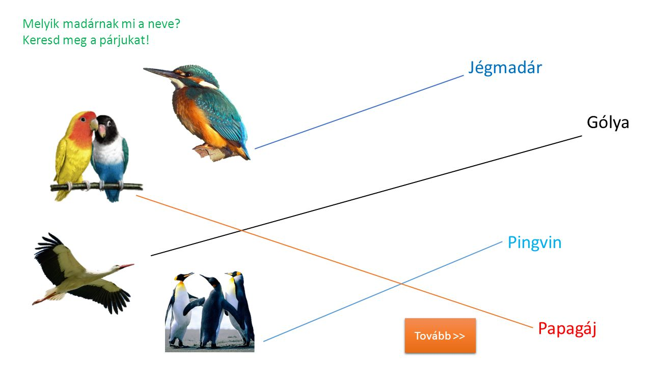 Jégmadár Gólya Pingvin Papagáj Melyik madárnak mi a neve
