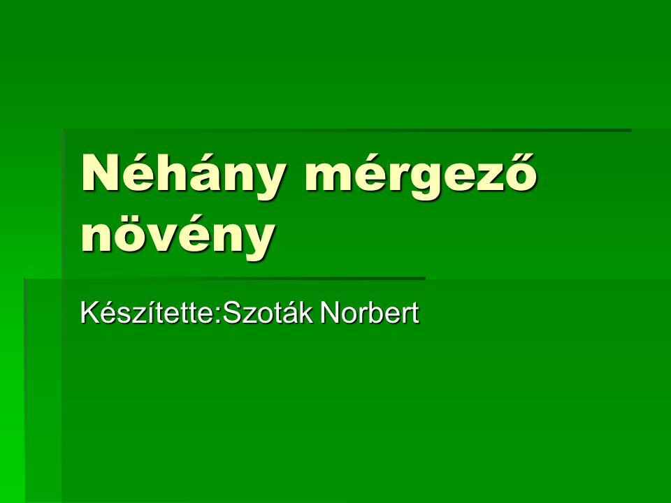 Készítette:Szoták Norbert