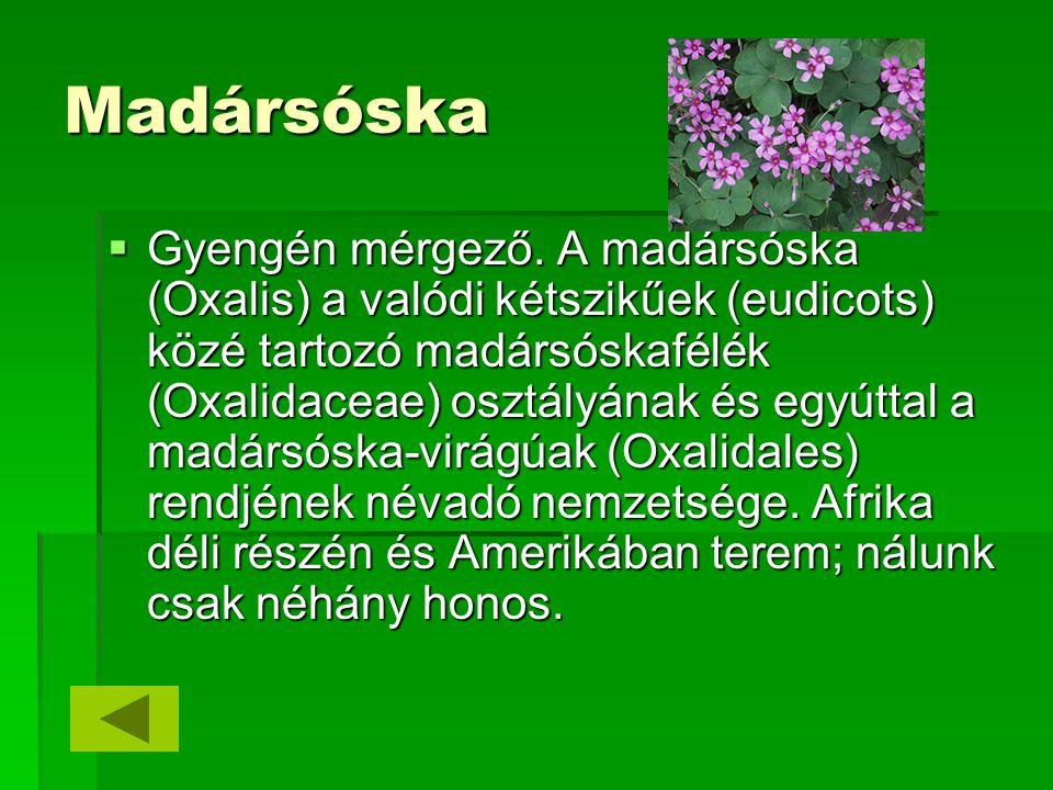 Madársóska