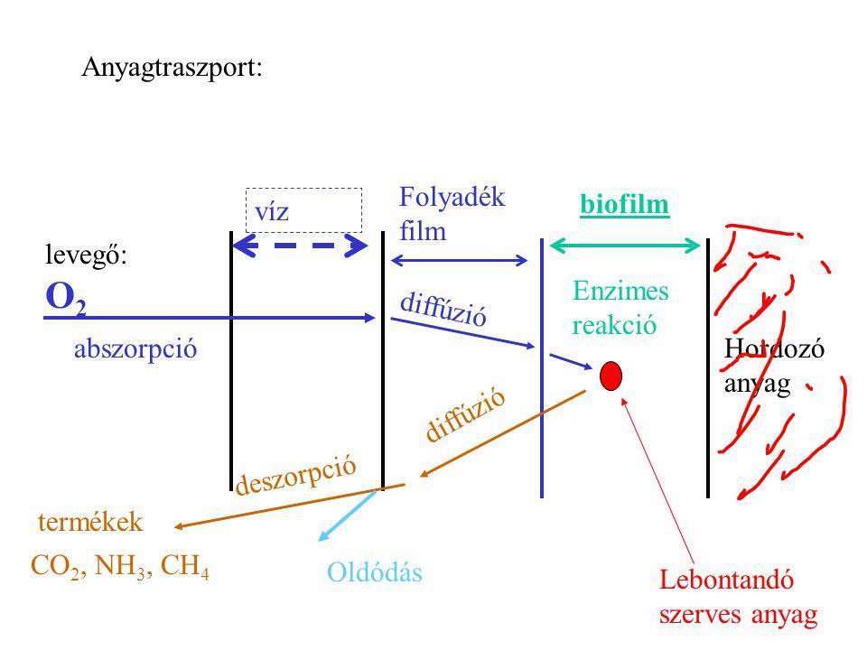 Anyagtraszport: Folyadék film. biofilm. víz. levegő: O2. Enzimes reakció. diffúzió. abszorpció.