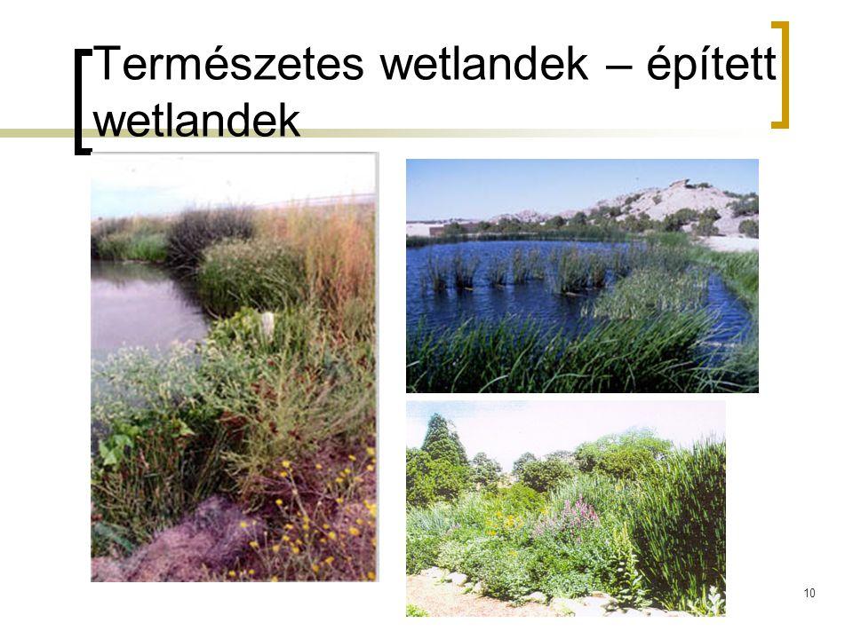 Természetes wetlandek – épített wetlandek