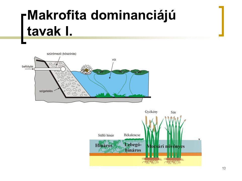 Makrofita dominanciájú tavak I.