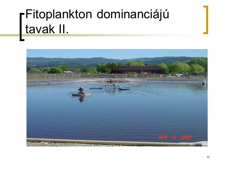 Fitoplankton dominanciájú tavak II.