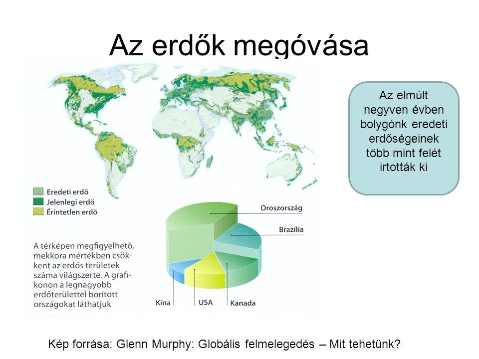 Az erdők megóvása Az elmúlt negyven évben bolygónk eredeti erdőségeinek több mint felét irtották ki.