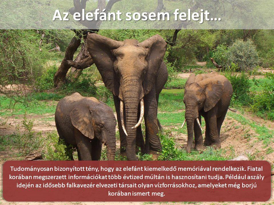 Az elefánt sosem felejt…