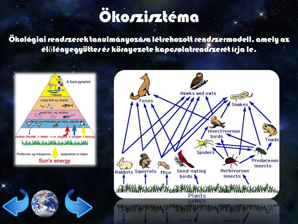 Ökoszisztéma Ökológiai rendszerek tanulmányozása létrehozott rendszermodell, amely az élőlényegyüttes és környezete kapcsolatrendszerét írja le.