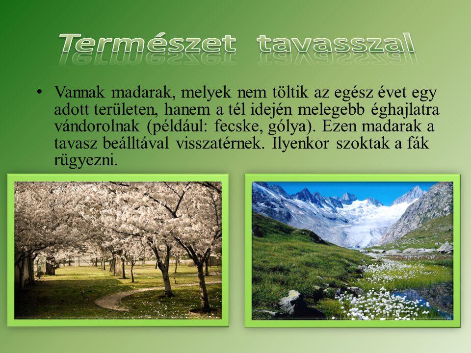 Természet tavasszal