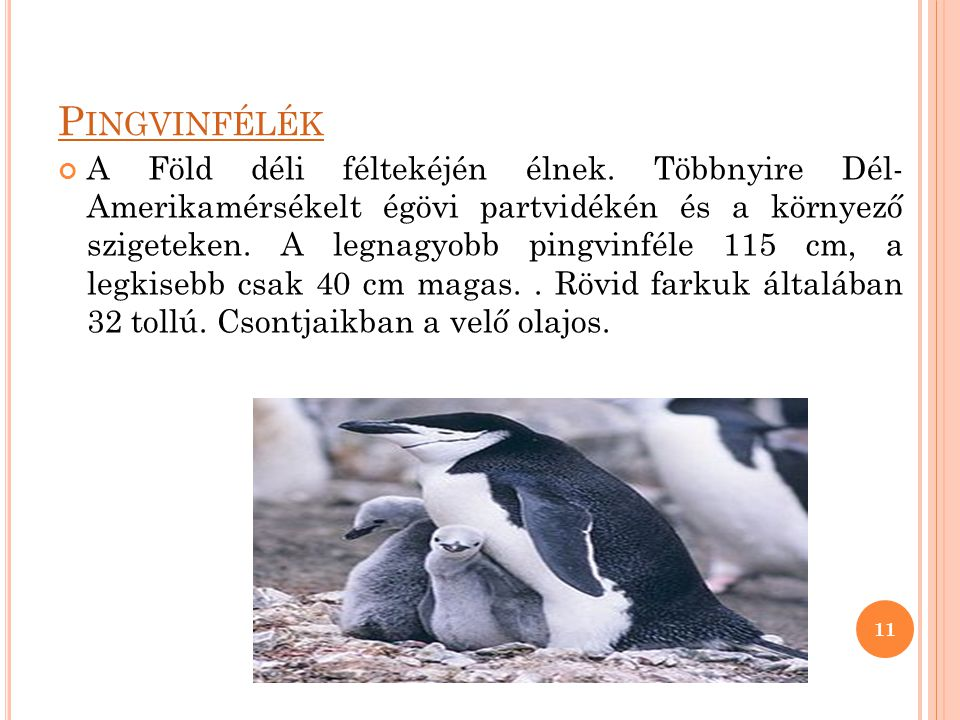 Pingvinfélék