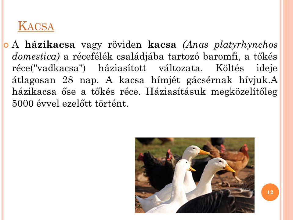 Kacsa
